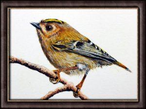 Watercolour video tutorial painting a goldcrest bird