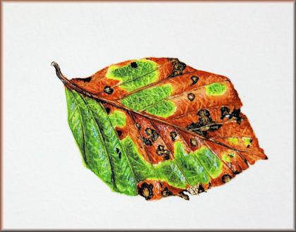 Watercolour video tutorial on painting leaves
