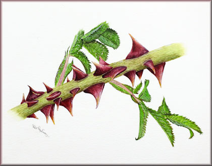 Button link to a botanical watercolour video tutorial