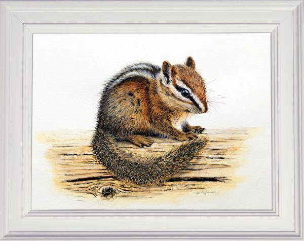 Chipmunk watercolour painting in a white frame