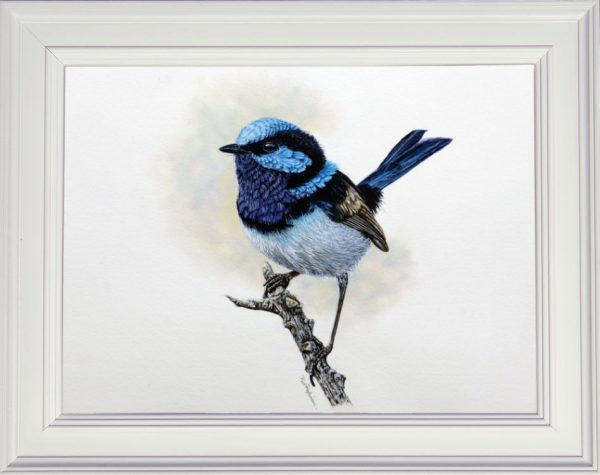 Fairy wren watercolor painting by Paul Hopkinson framed