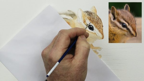 How to paint a chipmunk in fine detailed watercolor step 1
