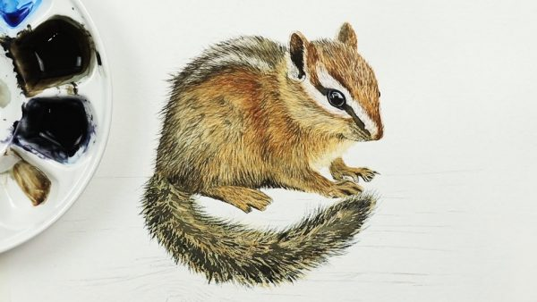 How to paint a chipmunk in fine detailed watercolor step 3