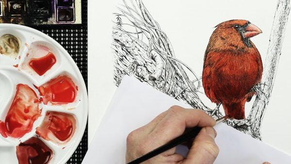How to paint a watercolor cardinal stage 3