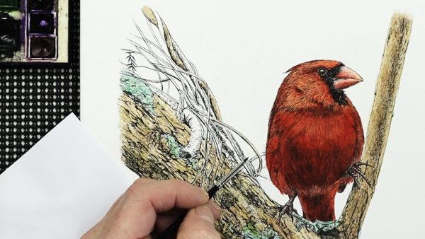 How to paint a watercolor cardinal stage 4