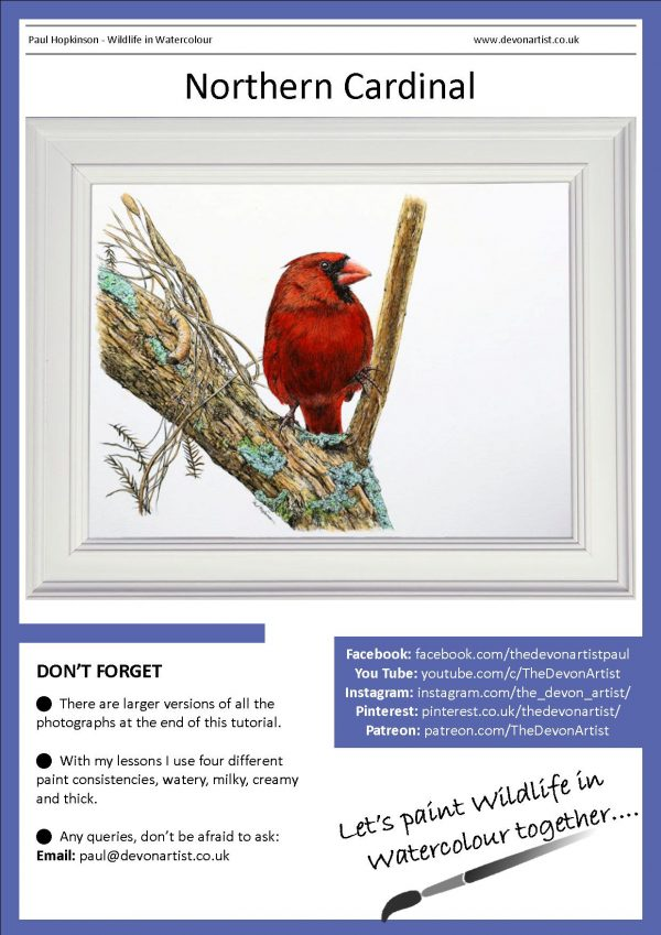 Ink and watercolor red cardinal painting pdf tutorial
