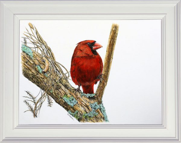 Red Cardinal pen & wash painting by Paul Hopkinson in a frame