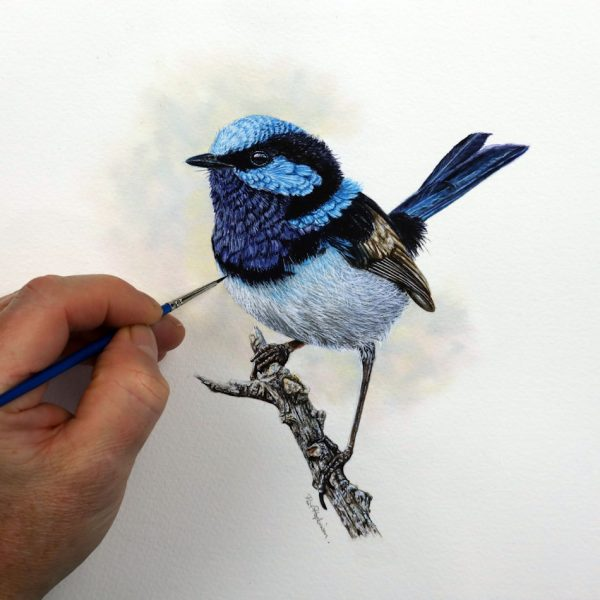Superb Fairy Wren by Paul Hopkinson, a watercolor painting
