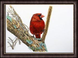 Watercolor painting of a cardinal bird by Paul Hopkinson