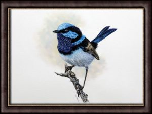 Watercolor painting of a Fairy Wren by Paul Hopkinson