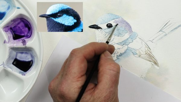 Watercolor step by step lessons fairy wren part 1