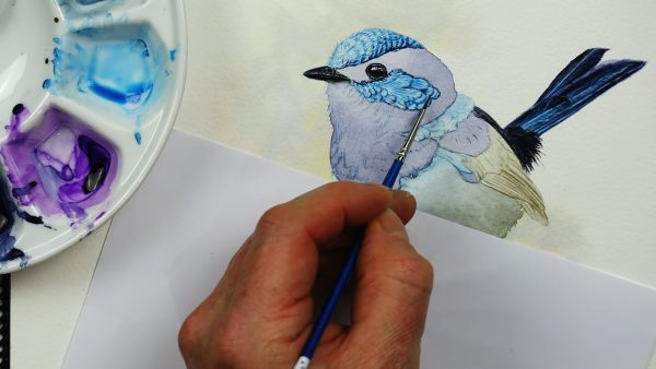 Watercolor step by step lessons fairy wren part 2