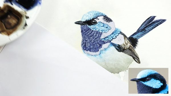 Watercolor step by step lessons fairy wren part 3