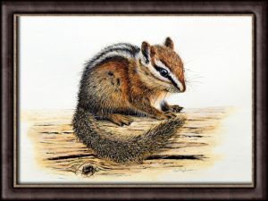 Original Watercolor Chipmunk Painting - Detailed Fine Art Illustration