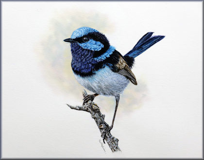 Button link to a watercolour video tutorial on painting a fairy wren