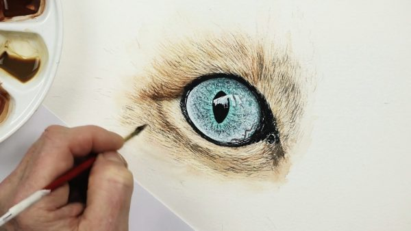 How to paint realistic eyes in watercolour step 4