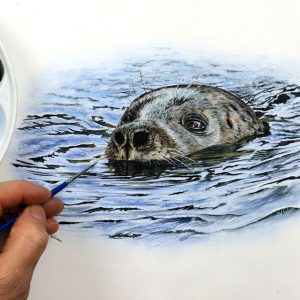 Paul Hopkinson painting a realistic seal in fine detailed watercolour