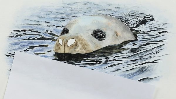A realistic watercolour seal painting lesson step 3