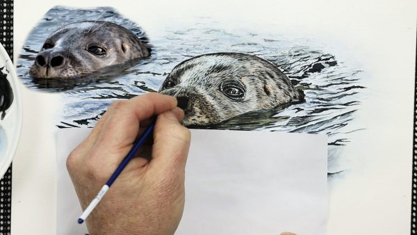 A realistic watercolour seal painting lesson step 4