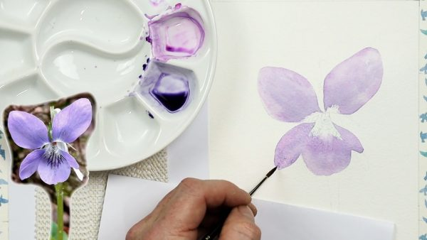 Botanical watercolor study of a violet flower stage 1