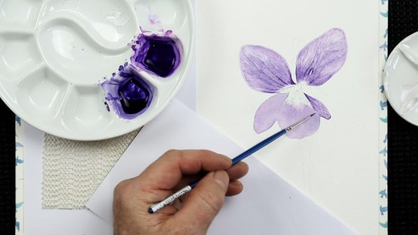 Botanical watercolor study of a violet flower stage 2