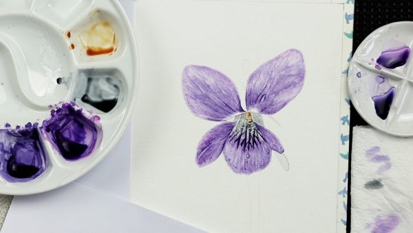 Botanical watercolor study of a violet flower stage 3
