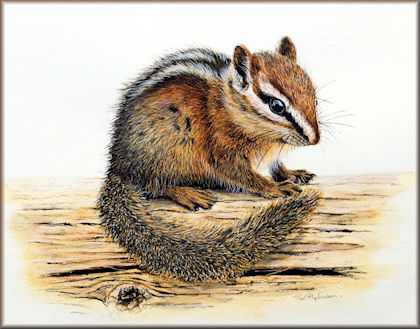 Button link to a chipmunk watercolour video tutorial