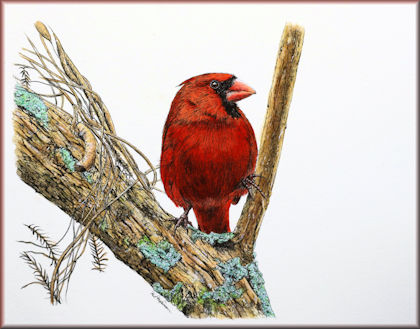 Button link to a watercolour video tutorial on painting a cardinal