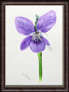 Botanical Watercolour Flower Study - Dog Violet PDF Painting Tutorial