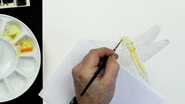 The painting stages of a watercolour dragonfly by Paul Hopkinson - step 1
