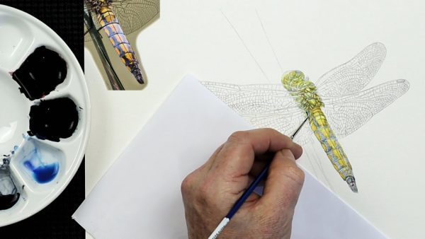 The painting stages of a watercolour dragonfly by Paul Hopkinson - step 2