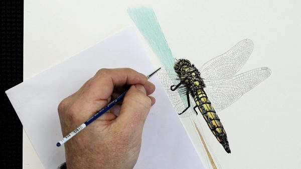 The painting stages of a watercolour dragonfly by Paul Hopkinson - step 3