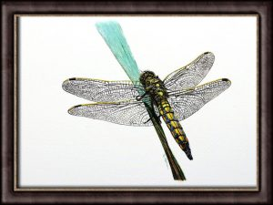Original Watercolour Dragonfly Painting - Detailed Fine Art Illustration