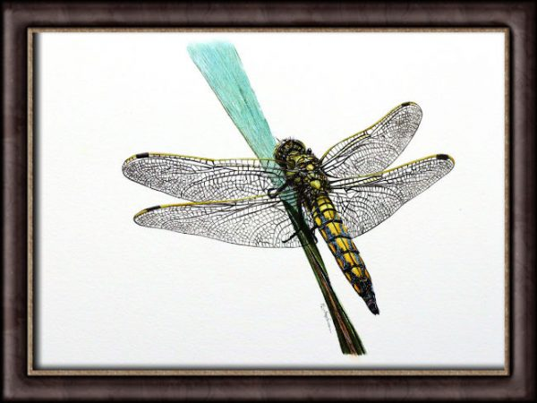 Watercolor dragonfly video tutorial finished painting