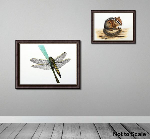 Watercolour painting of a dragonfly by Paul Hopkinson framed on a wall