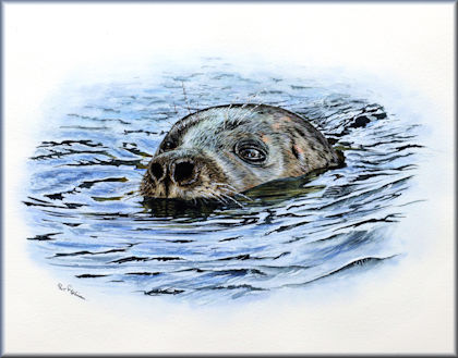 Button link to a seal watercolour video tutorial