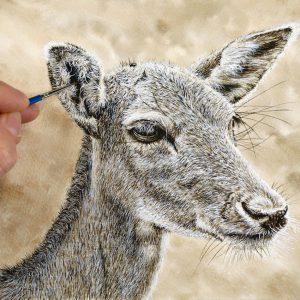 Paul Hopkinson painting a fallow deer watercolour illustration