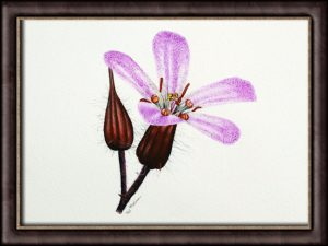 Original watercolor painting of a wildflower by Paul Hopkinson