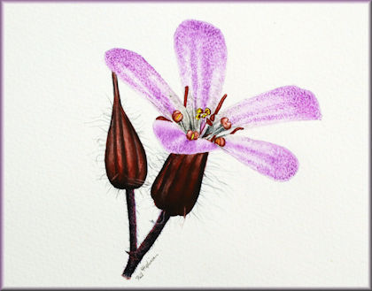 Button link to a wildflower watercolour video tutorial