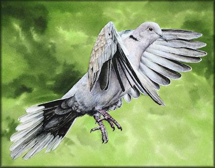 Button link to a Dove watercolour video tutorial