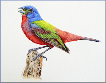 Button link to a realistic watercolor bird painting lesson