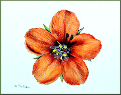 Button link to a watercolour video tutorial on painting wild flowers