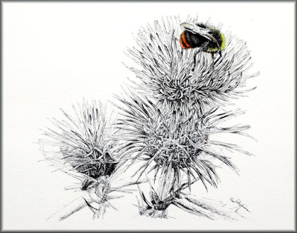 Button link to a thistle and bee pen and watercolor wash painting