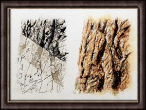 Learn how to paint bark texture using watercolour