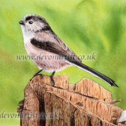 Long Tailed Tit by Paul Hopkinson