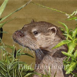 Giclée Watercolour Otter Print, Detailed Fine Art