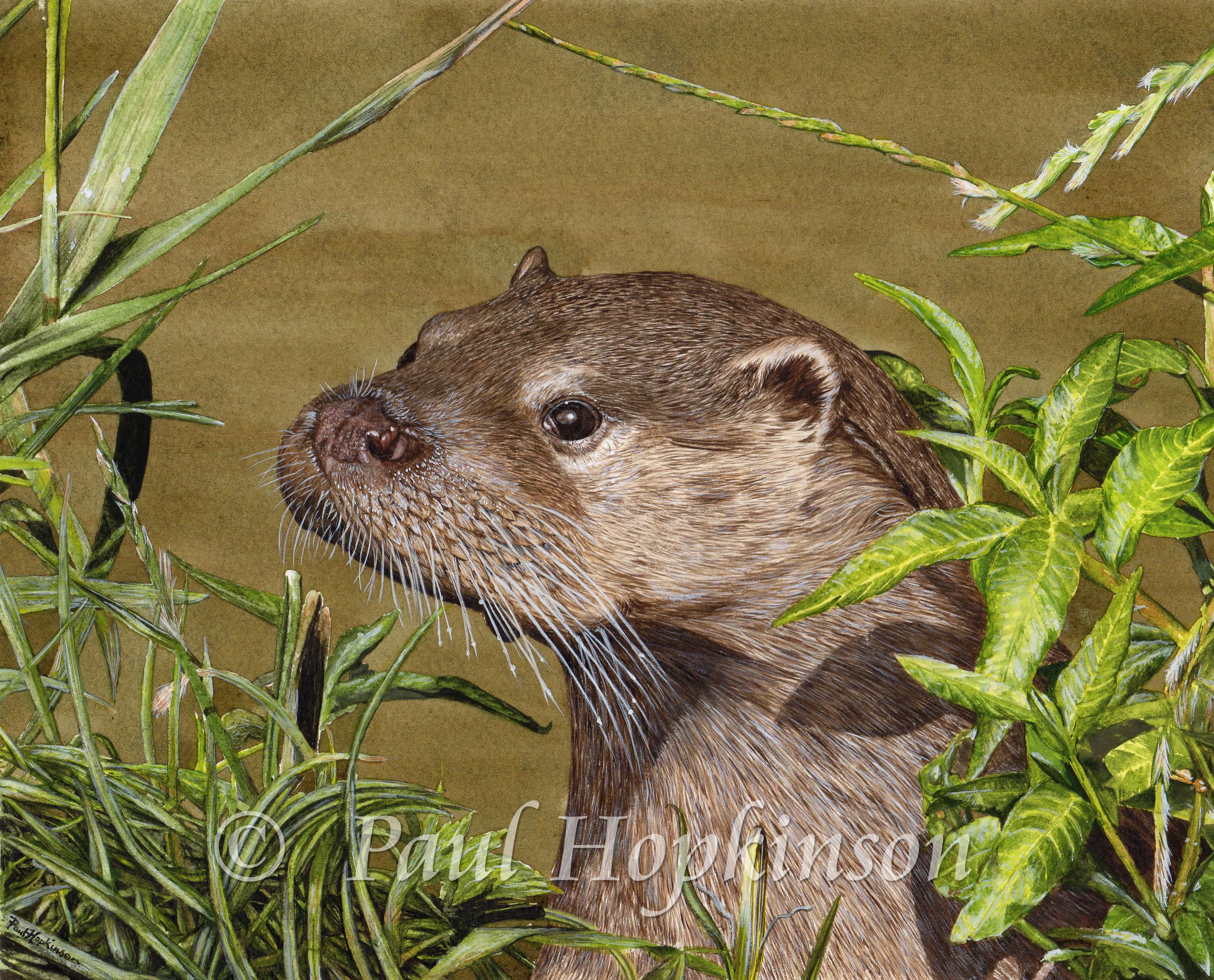Otter Watercolour Lesson