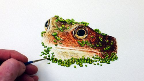 Frog in watercolour